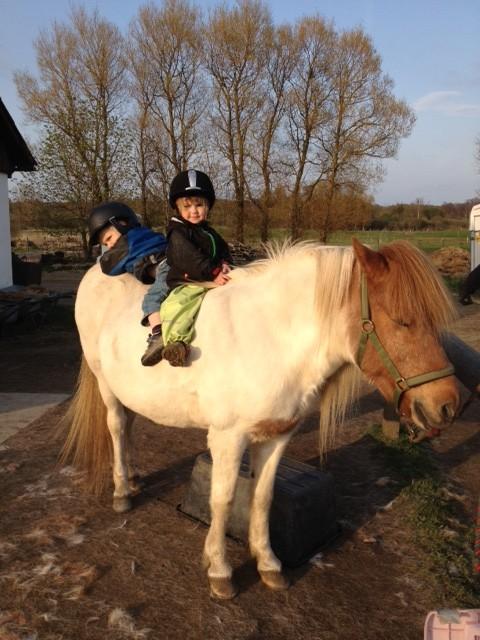 stora hästar till salu